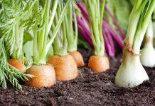 How to Grow a Simple Organic Garden