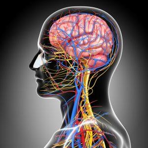 healthy nervous system