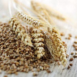 gluten and fibromyalgia