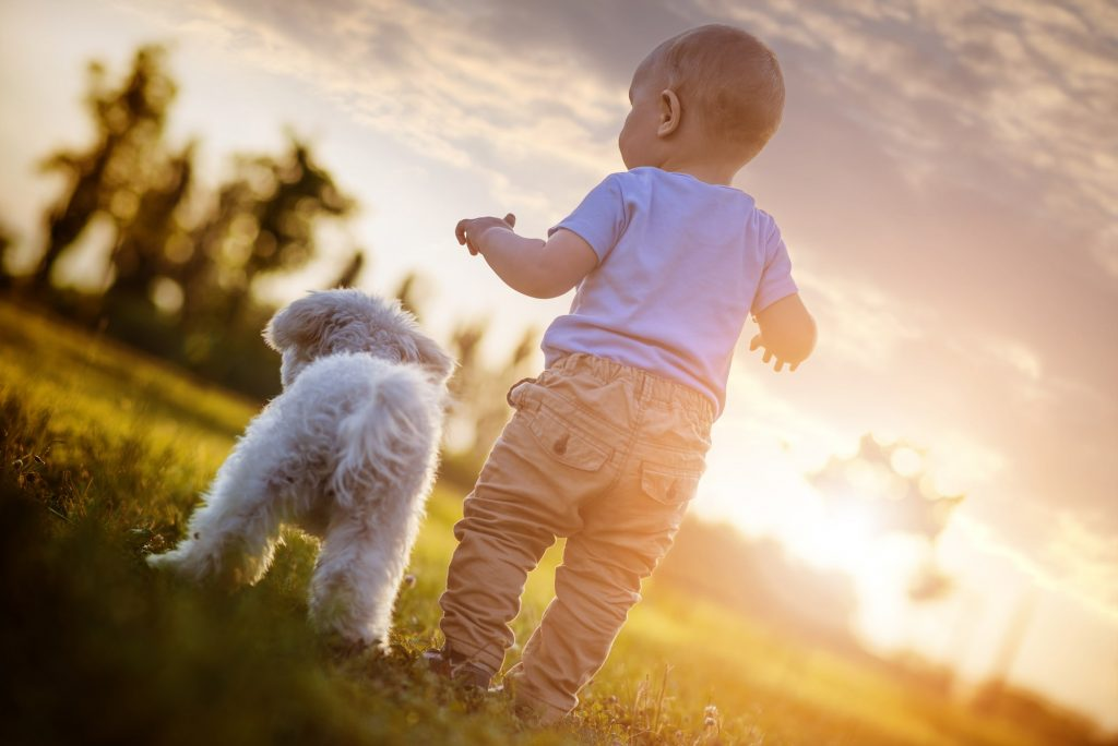 best dogs for kids