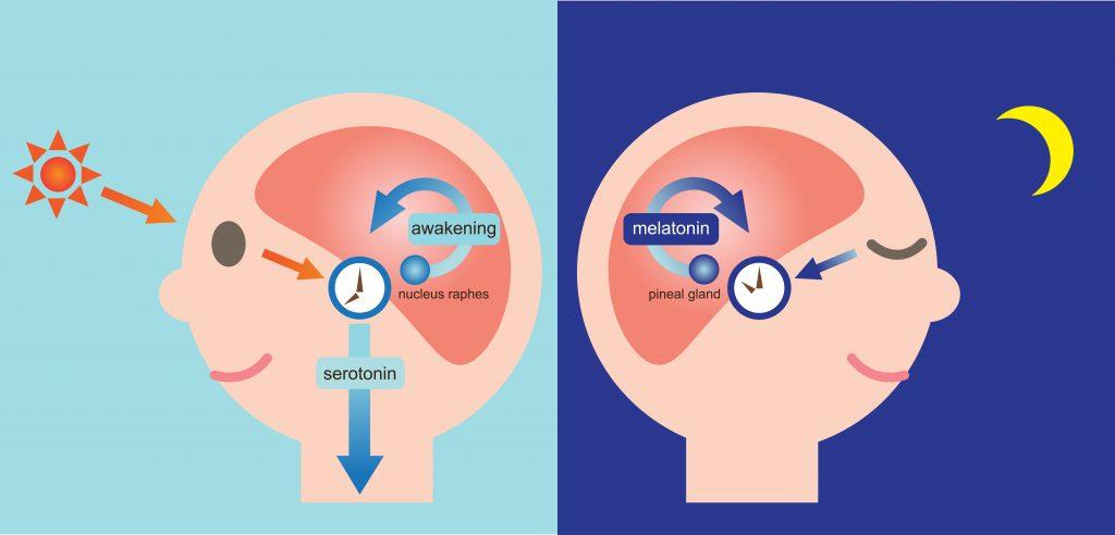 melatonin dosage, what is melatonin, how much melatonin should I take, melatonin health benefits