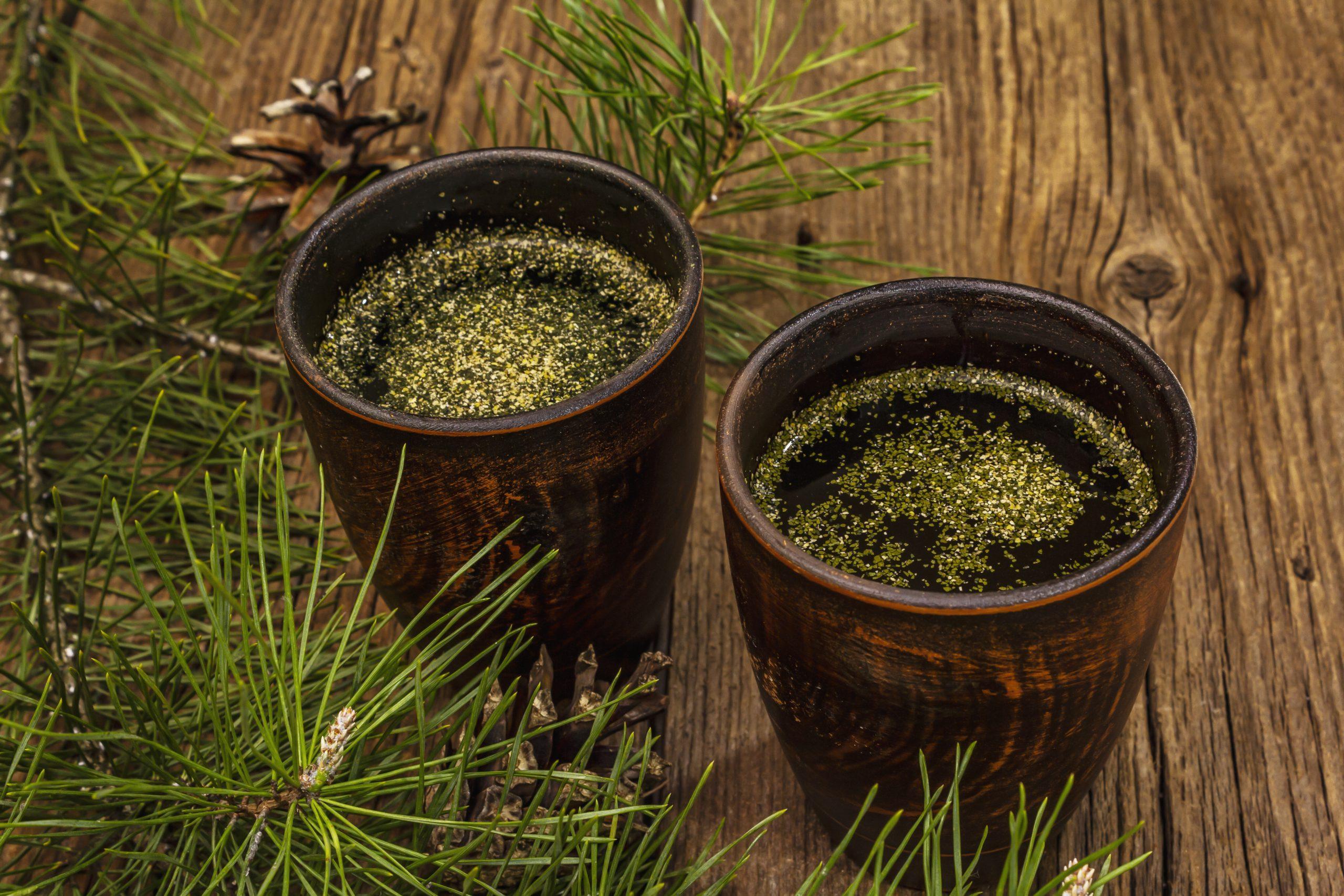 pine needle tea benefits, pine needle tea health benefits, where to buy pine needle tea, how to make pine needle tea, are pine needles safe for tea, are pine needles toxic to humans