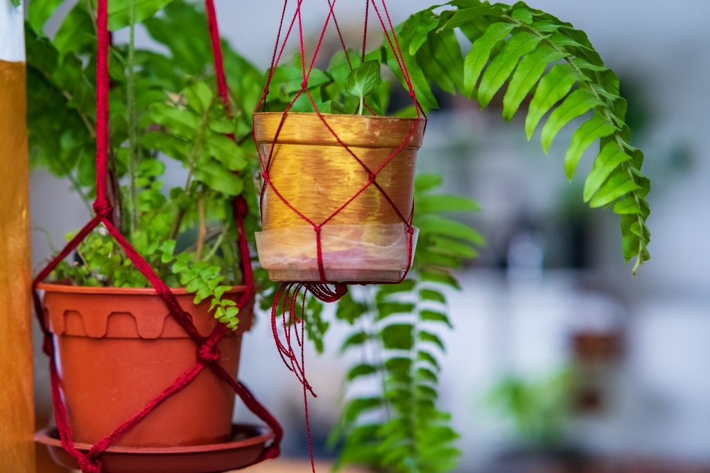 air purifying house plants, best air purifying house plants, air purifying house plants low maintenance, house plants that purify the air
